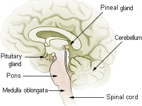 Pineal Gland Section Announcement